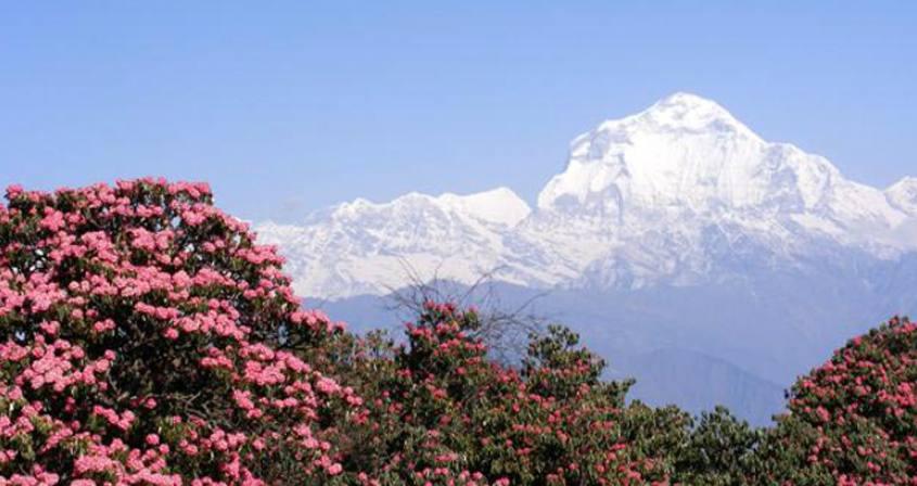 Dhaulagiri Region Trekking