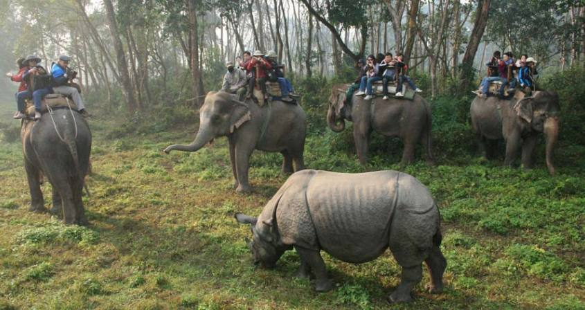 Jungle Safari in Nepal